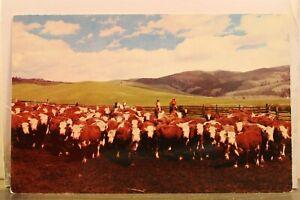 Montana MT Purebred Herefords Postcard Old Vintage Card View Standard Souvenir