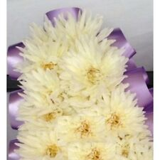 144 Artificial Cream Chrysanthemum  Picks Funeral Tribute Flowers