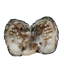 Hot Freshwater Love Wish Bulk Akoya Oysters with Large Pearls Gifts 10-20pcs/Lot