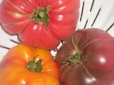 Organic Rare heirloom Brandywine Variety pack tomato Seeds red,yellow and black