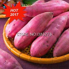 200Pcs Giant Sweet Potato Seeds Vegetable Seed Happy Farm Flowering Plants Fruit