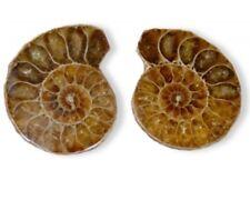 Ammoniten Paar, Fossilien, 3 cm Fossil versteinerte Schnecke 30mm Stein
