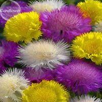 Rare Beautiful Colorful Cornflower Flowers, 50 Mixed Seeds, nice centaury light