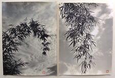2 Photos 尼采 nícǎi - Bambous - Chine China - Tirages argentique 1950 - 30 x 40 -