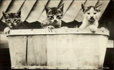 Kitty Cats Kittens in Basket Real Photo Postcard