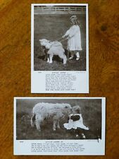 Little Lamb - 2 vintage postcards, c. 1906, unused, Rotary Photographic Series