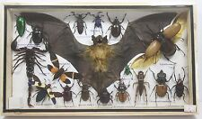 REAL EXOTIC BAT COLLECTION SPIDER SCORPION BUG INSECTS DISPLAY TAXIDERMY FRAME A