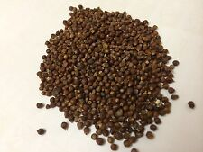 Grains of Paradise Gourmet Spice 50g Thespiceworks-hereford Herbs & Spices