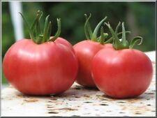 25 Graines de Tomate Rose de Berne Méthode BIO seeds légumes ancien rare