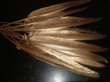 lot de 10 plumes dorées  35 cm oie