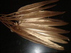 lot de 10 plumes dorées  30 cm oie