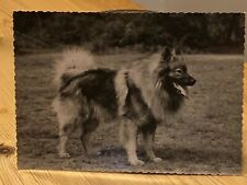More details for rare keeshond original dog photograph by henri dimont paris 1950 nr 2