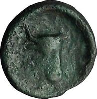 Histiaia in Euboia 338BC Nymph & Cow Genuine Authentic Ancient Greek Coin i48807