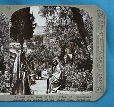Stereoview Photo Jerusalem Garden Of Gethsemane Ancient Olive Trees Realistic