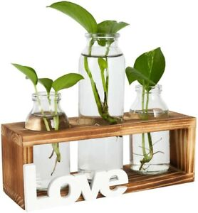 Plant Terrariums Kit Table Top Hydroponics Air Planter Holder with 3 Glass Vase