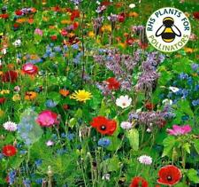 More details for wild flower seeds - bee & butterfly mix - great colours - 25g pack