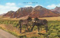 Postcard Lunch on the Desert