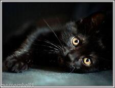 4 Autumn Black Cat Cats Kitten Kittens Note Stationery #12 Notecards/ Envelopes