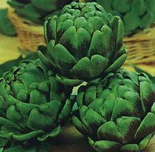 Artichoke - Green Globe - 40 Seeds