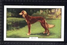 Gallaher Dogs 2nd Series 1938 - Saluki No. 9