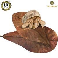 Sungrow Catappa Ketapang Indian Almond Leaf for Fish Tank Leaves