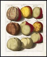 Antique Print-APPLES-TAB II-Pomologia-Knoop-1758