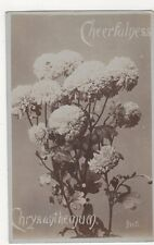 Cheerfulness, Chrysanthemum, JWS Real Photo Postcard, M029