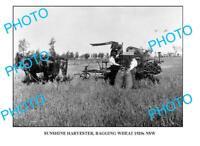 OLD LARGE PHOTO SUNSHINE HARVESTER BAGGING c1920 NSW