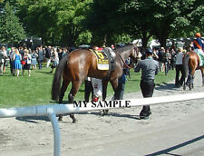 STEPHANIE'S KITTEN 8 by 10 PHOTO 2014 Horse Race BELMONT PARK Breeders Cup #5