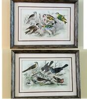 "2 Framed Prints  ""A History of the Earth, Animated Nature"" Birds 17"" x 22"" LOT"