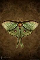Steampunk Luna Moth by Brigid Ashwood Art Print Poster 24x36 inch