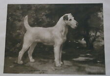 WIRE HAIRED FOX TERRIER NAMED CHAMPION DUSKY REINE DOG PRINT BY W WATTS 1905