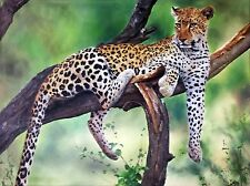"RON BALABAN ""LEOPARD"" 