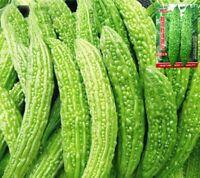 Chinese Vegetable Bitter Melon Gourd Balsam Pear 20 Seeds 原装彩包春夏秋四季播蔬菜长绿大肉白苦瓜种子