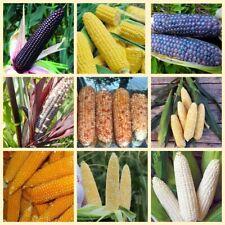 40Pcs Corn Vegetable Seeds Frumentum 10 Kinds Garden Organic Sweet Plants Annual