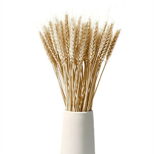 Dried Wheat Stalks Natural Wheat Sheave Bundle 100 Stems Wheat Sheaves
