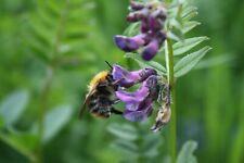Wild Flower Butterfly & Bee Seed Mix Native Flowering Easy Maintenance Garden