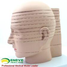 19*17.5*24.5cm Horizontal Section 12pcs Human Head CTMRI Anatomy Brain Model