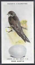 OGDENS-BRITISH BIRDS & THEIR EGGS-#21- SAND MARTIN