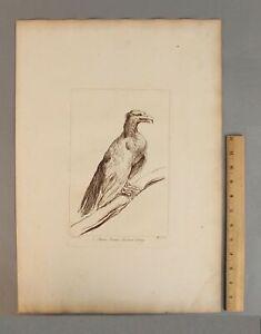 Antique 18thC Antique ARTHUR POND Engraving EAGLE aft 16thC Guercino Old Master