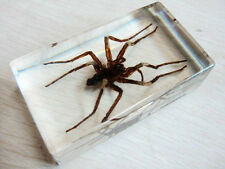 Insect Paperweight Taxidermy Specimen Golden Alive Spider Lucid Ice Jewelry