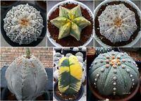 100 FRESH SEEDS Astrophytum Cactus mix Grow easily Kaktus RARE