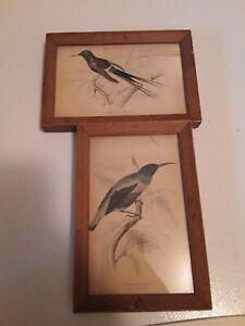 Lizars Bird Engravings Original Bookplate Framed Plate No. 5 and 10