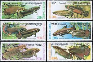 Fighting fish of the genus Betta (MNH)