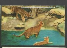 pk47016:Postcard-Tigers Bathing at Cincinnati Zoo,Cincinnati,Ohio