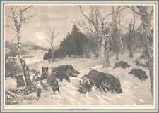"""Jäger-Jagd-Wildschweinjagd-Sauhatz""""Jagd auf Wildschweine""""Orig.Holzstich von 1887"""