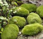 FD2192 Stone Moss Miniature Dollhouse Garden Craft Fairy Bonsai Plant Decor 1pc