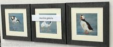 3 Cadres déco mer oiseaux breton goeland marine neuf fabr. Bretagne série N° 1