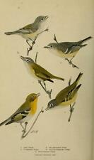 BIRD LORE MAGAZINE color prints ORNITHOLOGY 144 issues antique old DVD 1899-1922