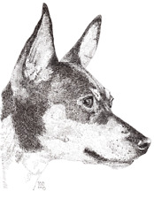 Toy Fox Terrier Cards 10 Cards